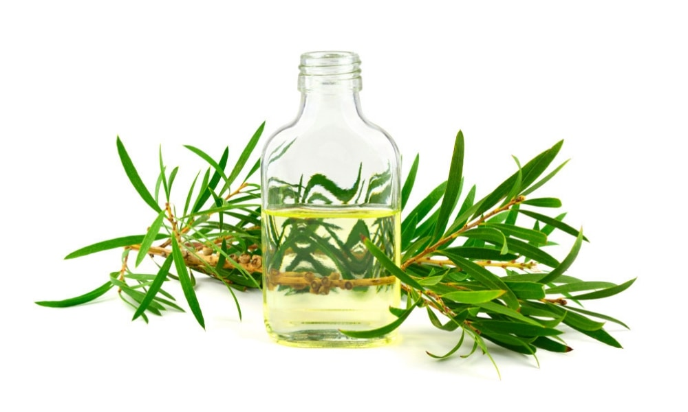 huile essentielle cajeput